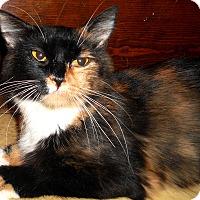 Adopt A Pet :: Sabine - Chattanooga, TN