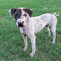 Adopt A Pet :: Remi - Kingsland, TX