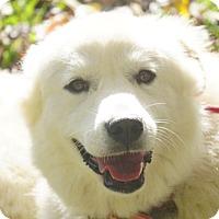 Adopt A Pet :: Marza - Allentown, PA