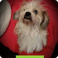 Adopt A Pet :: Benji - Weatherford, TX