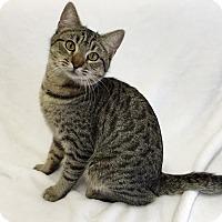 Adopt A Pet :: Clark - Mission Viejo, CA