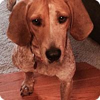 Adopt A Pet :: Penelope *Courtesy Post* - Clarkston, MI