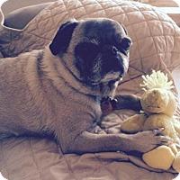 Adopt A Pet :: Bruiser - Omaha, NE