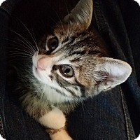 Adopt A Pet :: Hennessy - Orange, CA