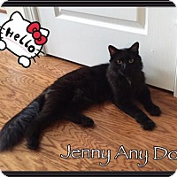 Adopt A Pet :: Jenny Any Dot - Hampton, VA
