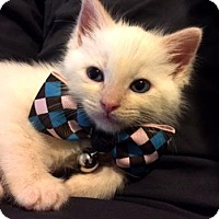 Adopt A Pet :: Toto - Austin, TX