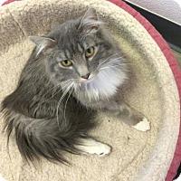Adopt A Pet :: Curly - Estherville, IA