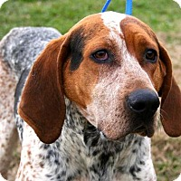 Adopt A Pet :: Chance - Erwin, TN
