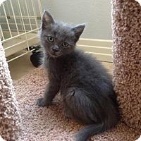 Adopt A Pet :: Francesca - Austin, TX