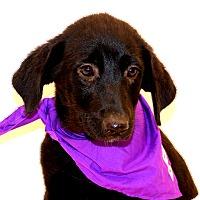 Adopt A Pet :: Jitterbug~ meet me! - Glastonbury, CT