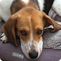 Adopt A Pet :: Miley - Charleston, SC