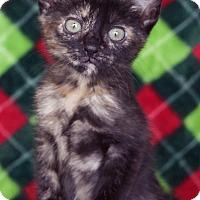 Adopt A Pet :: Mocha - St Louis, MO