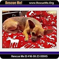 Adopt A Pet :: Yuma - Rancho Cucamonga, CA