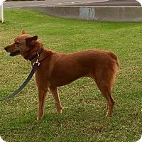 Adopt A Pet :: ROSALIE - Phoenix, AZ