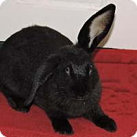 Adopt A Pet :: Flopster - Woburn, MA