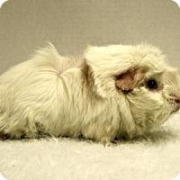 Adopt A Pet :: Charlotte - West Des Moines, IA