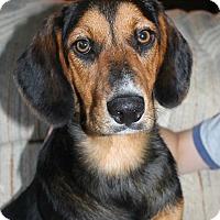 Adopt A Pet :: Tucker: Heath Ohio - Cincinnati, OH