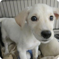 Adopt A Pet :: Luis - Murphysboro, IL