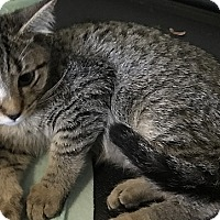 Adopt A Pet :: Zelda - Tampa, FL