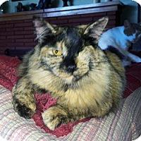 Adopt A Pet :: Zoey - Mission Viejo, CA