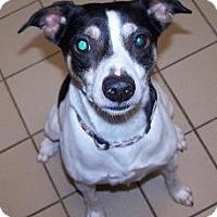 Adopt A Pet :: Jasper - Jackson, MI