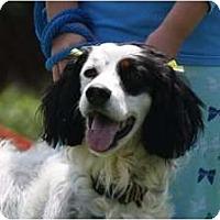 Adopt A Pet :: Thelmalou - Columbus, OH