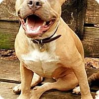 Adopt A Pet :: Mina - New orleans, LA