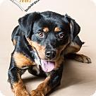 Adopt A Pet :: Roxy