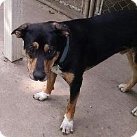 Adopt A Pet :: Max - Geneseo, IL