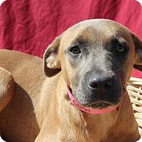 Adopt A Pet :: Luna - Waldorf, MD