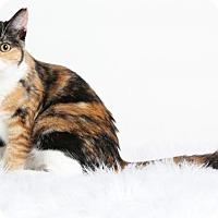 Adopt A Pet :: Fluffy - Roseville, CA