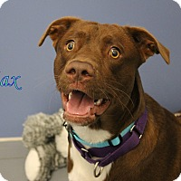 Adopt A Pet :: Max - Winter Haven, FL