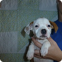 Adopt A Pet :: Kisses - Oviedo, FL