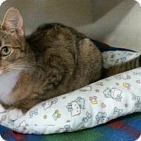 Adopt A Pet :: Duchess - Berkeley Hts, NJ