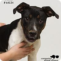 Adopt A Pet :: Farrah - Baton Rouge, LA