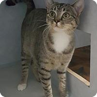Adopt A Pet :: Effie - Cody, WY