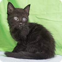 Adopt A Pet :: Xander - Austin, TX