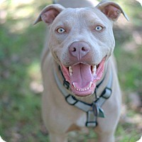 Adopt A Pet :: Dobby - College Station, TX
