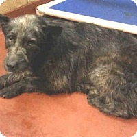 Adopt A Pet :: TREK - Atlanta, GA