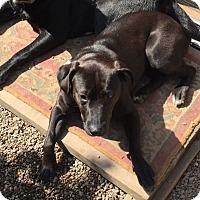 Adopt A Pet :: Raven - East McKeesport, PA