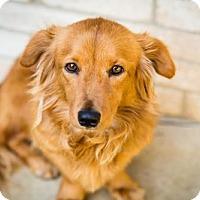 Adopt A Pet :: Maeby - San Antonio, TX