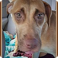 Adopt A Pet :: Brianna,, Shiloh, Shelby - Ahoskie, NC