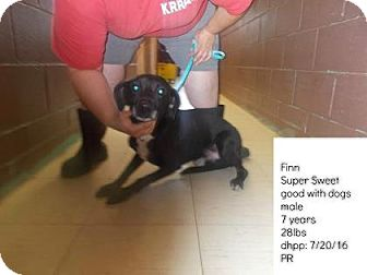 Retriever (Unknown Type) Mix Dog for adoption in Woodstock, Illinois - Finn