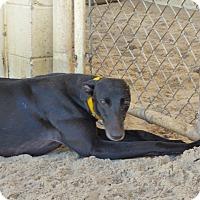 Adopt A Pet :: Camille - Aurora, OH