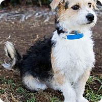 Adopt A Pet :: Florian - San Diego, CA