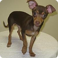 Adopt A Pet :: Tostada - Gary, IN