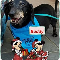 Adopt A Pet :: Buddy - Senior Boy - Rootstown, OH