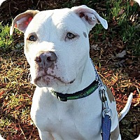 Adopt A Pet :: Thor - Greensboro, NC