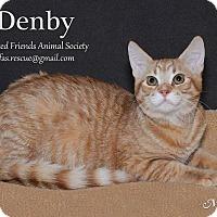 Adopt A Pet :: Denby - Ortonville, MI