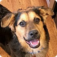 Adopt A Pet :: Cinnamon - Bedford Hills, NY